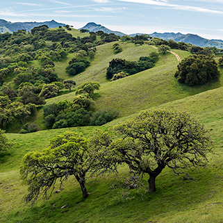 Oak Woodlands, Pacheco State Park, CA