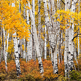 Aspen Grove, Last Dollar Road, CO